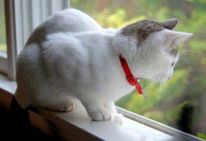 сетка антикошка на окно